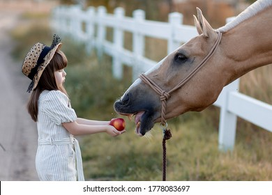 a girl feeds a horse an Apple, a girl feeds a horse
