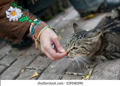 girl feeds a stray cat on the street