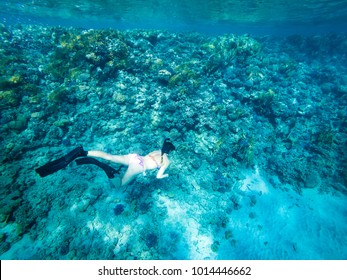 Girl Freediving Beautiful Red Sea Egypt