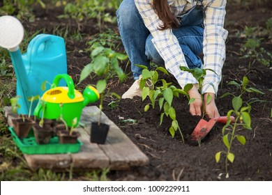 Girl in the garden makes planting seeds
