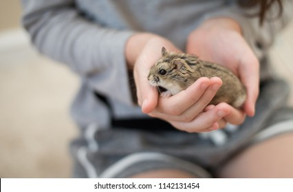 A girl gently holding an adorable hamster in her hands.
