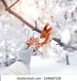 Girl giving ginger bread to Funny squirrel in the forest on Christmas time