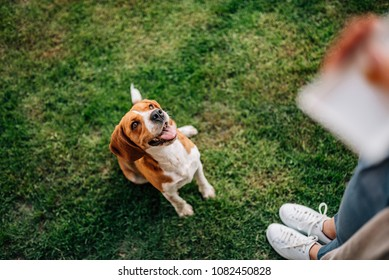 Girl giving a treat to happy dog.