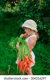 Girl gnaws carrot with a bunch of carrots freshly