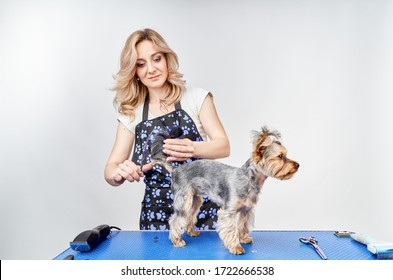 girl groomer makes a haircut for the dog