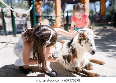 Girl is grooming a goat with a brush at a petting zoo.