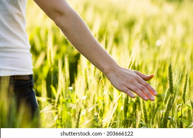 Girl hand touching wheat. Fresh harvest.
