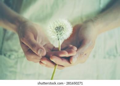 girl handing dandelion flower, instagram