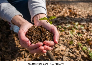 Girl hands holding young plant with soil. Environment preservation concept