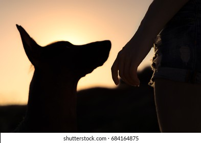 Girl and her dog on a walk, silhouetted against the sunsetting sky