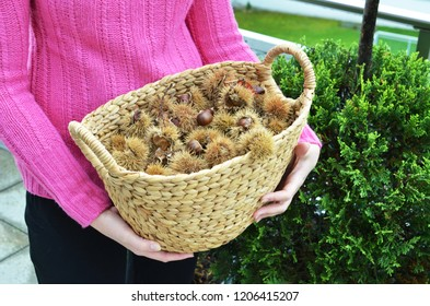 Girl holding a basket full of autumn chestnuts and leaves