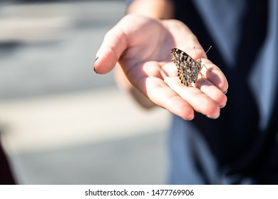 a girl holding a butterfly in her hands during a butterfly release at a memorial. landscape view of the butterfly and the hand
