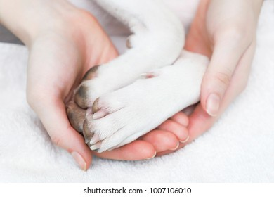 A girl holding a dog paws.