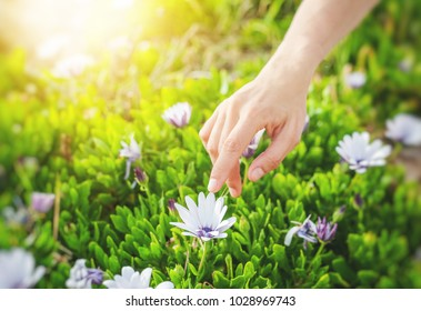 The girl is holding a flower bud in hands, spring mood