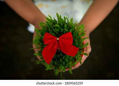 Girl holding green Christmas wheat in a pot with a red tie on the garden
