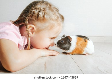 girl holding a guinea pig in her arms, on a black background. a lot of joy and fun