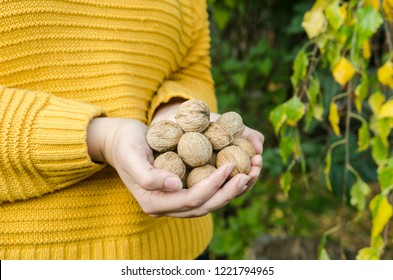 Girl holding in a handful of walnuts in yellow knitted sweater - autumn lifestyle picture