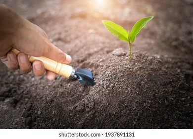 A girl holding hands that plowed the soil and took care of the seedlings World environment day concept Care for seedlings to grow. Save the world. Plant trees to reduce global warming.