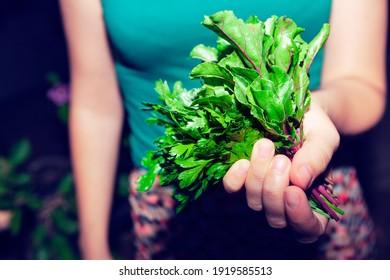 Girl holding in her hand salad plants . Healthy vegetables for lettuce