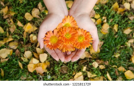 Girl holding in her hands orange autumn flowers in the garden with colorful leaves in the vackground