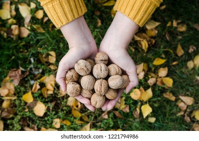 Girl holding in her hands walnuts - autumn lifestyle picture from above
