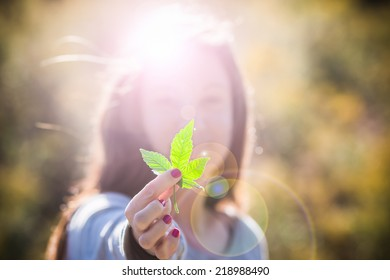 Girl Holding Marijuana Leaf. Pretty girl in outdoor late afternoon light holding a pot leaf, with lens flare.