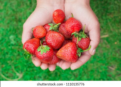 girl holding  natural, organic strawberry