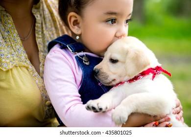 girl holding a puppy Labrador. purebred puppy labrador retriever and little girl