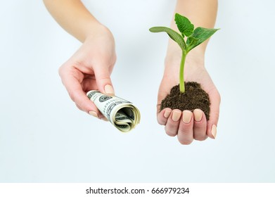 The girl is holding a seedling with the earth and twisting American money
