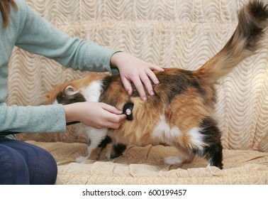 girl holding stethoscope and treat a beautiful fluffy cat on the couch at home