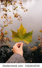 The girl holds a beautiful autumn leaf in her hands. Dry leaf closeup. Foliage wallpaper. Fall season, natural background. October and november holidays banner. Beautiful orange seasonal texture