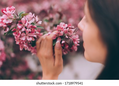 Girl holds a branch of blossoming spring flowers in hands. Close up of beautiful female hands holding a branch of blossoming fruit tree. Delicate spring background. Pink background.