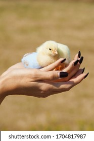 The girl holds a chick and an egg in her hands.