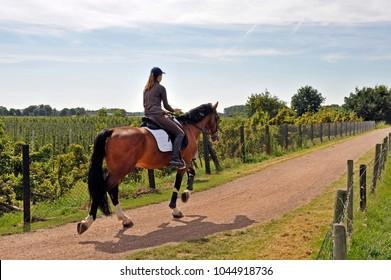 girl and horse on the kampsedijk near enspijk, betuwe, gelderland, netherlands