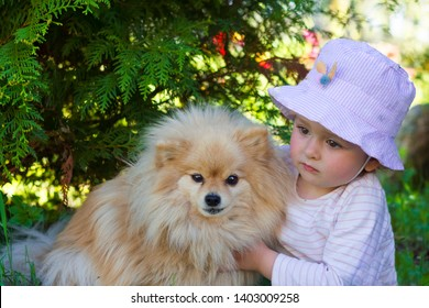 the girl hugging a pomeranian spitz, the dog is guarding the child