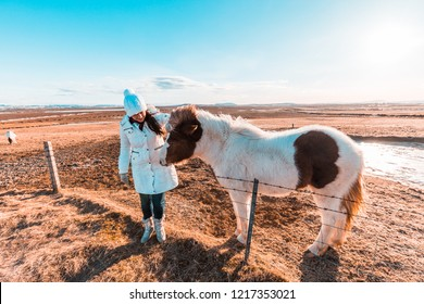 Girl with Icelandic horse in winter landscape. Iconic symbol of Iceland fauna, tourist point of interest