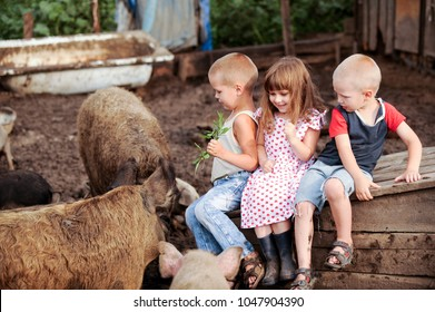 Girl from Italy came to visit her friends of boys from Russia. One girl and two boys feed the pigs. The girl was scared of a big sow. Concept of friendship between peoples and love of animals.