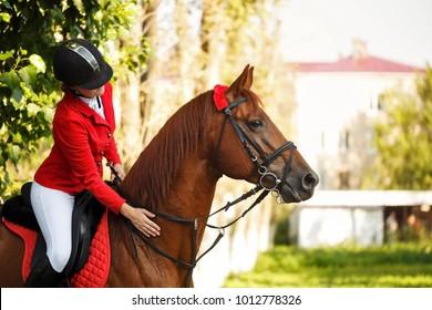 Girl Jockey Stroking A Horses Neck Outdoors Pedigree Horse For Equestrian Sport