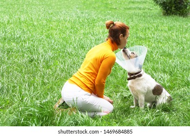 Girl kisses her dog. The dog wears an Elizabethan plastic conical medical collar around her neck to protect her from cuts on green grass. Jack Russell Terrier.
