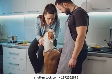 Girl kissing her dog while sitting on the kitchen countertop by her boyfriend