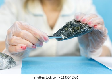 The girl laboratory technician examines samples of minerals. A woman lab worker examines the stones with tweezers takes the fibers of harmful asbestos.