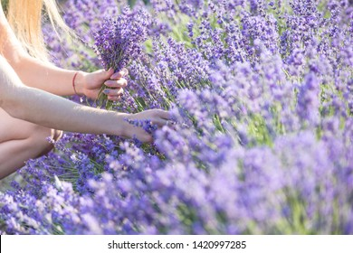 A girl with long hair collects lavender in a bouquet. A woman inhales the fragrance of flowers. Lavender field in Provence.