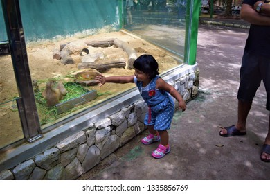 girl looking animals in  Glass cage in the Zoo