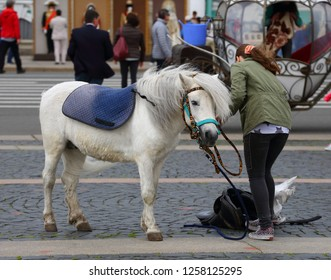The girl next to the white pony in windy weather, the Dvortsovaia ploshchad  Saint Petersburg Russia