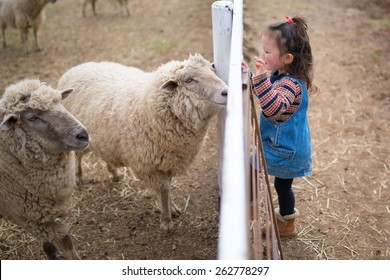 Girl to observe the sheep in the fence