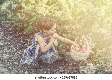 A girl on an egg hunt collects color dyed Easter eggs in her basket outdoors in a garden during the spring season.  Part of a series.  Filtered for a retro, vintage look.