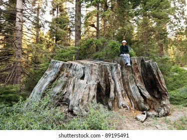 girl on giant stump in Sequoia National Park in USA