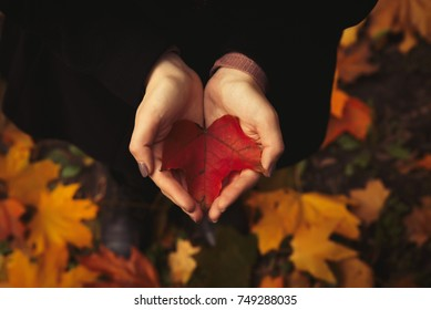 The girl with open hands is holding a red leaf in the forest