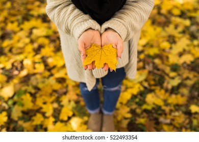 Girl open hands with yellow leaves in forest