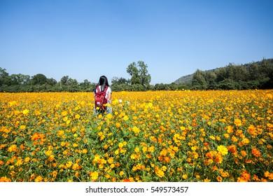 Girl in orange cosmos flowers garden field on blue sky background